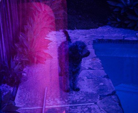 Unknown Dog.